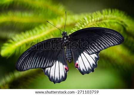 Black and white tropical butterfly resting on the green branch - stock photo