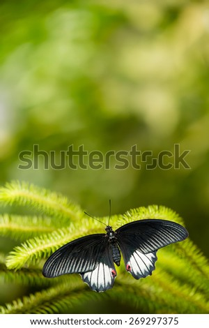 Black and white tropical butterfly with green background - stock photo