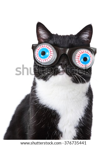 Black and White tuxedo cat wearing funny spring eyeball glasses  - stock photo