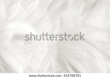Black and white vintage color trends chicken feather texture background,Interior soft luxury gray heaven angels,Modern image used for design living room,office and others