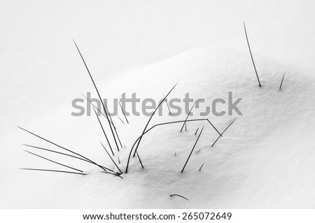 Black and white winter background: Grass in the snow covered fields, Adrspach, Czech Republic - stock photo