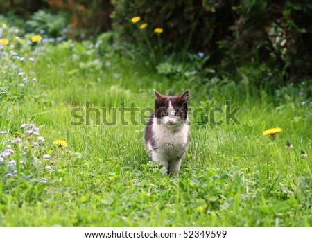Black and white young cat sitting in green grass in spring garden - stock photo