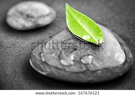 Black and white zen stones submerged in water with color accented green leaf - stock photo