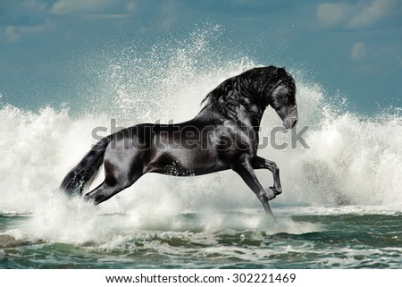 black andalusian stallion runs through the sea wave foam