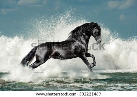 black andalusian stallion runs through the sea wave foam - stock photo