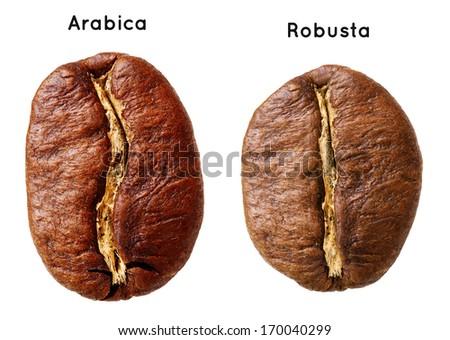 Black arabica, robusta coffee bean isolated on white background. - stock photo