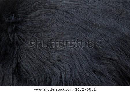 black bear fur texture - stock photo