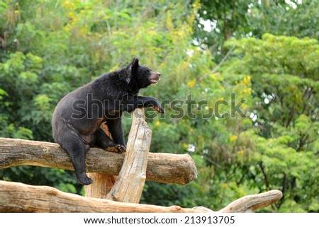 Black bear on the log in forest  - stock photo