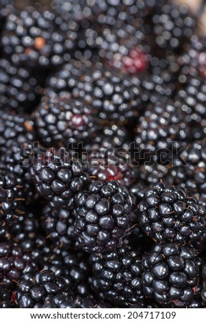Black berries harvested.