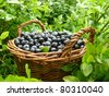 black berries in the basket - stock photo