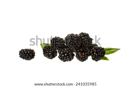 Black berries isolated on whit background - stock photo