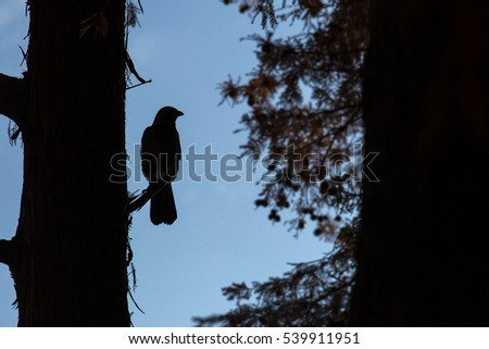 black bird in on a tree sky