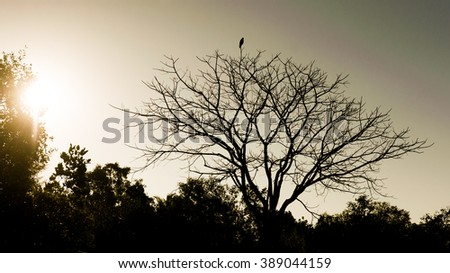 Black bird silhouette on bald dead tree in the sunset - stock photo
