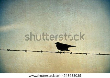 Black bird sitting on barbed wire, blended with a textured background for painterly feel - stock photo