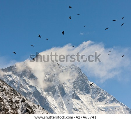 Black birds on the top of the Lhotse (8516 m) - Everest region. Nepal, Himalayas - stock photo