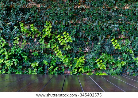 black board with green leaf wall  - stock photo