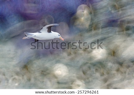 Black browed albatross in flight with abstract background - stock photo
