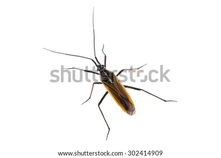 Black brown bug isolated on a white background