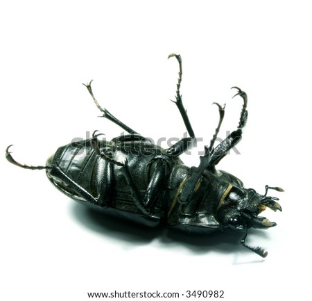 Black bug isolated on white suggesting laugh or death - stock photo
