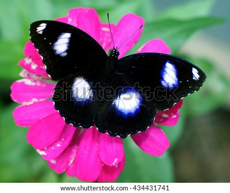 black butterfly on pink flower bloom - stock photo