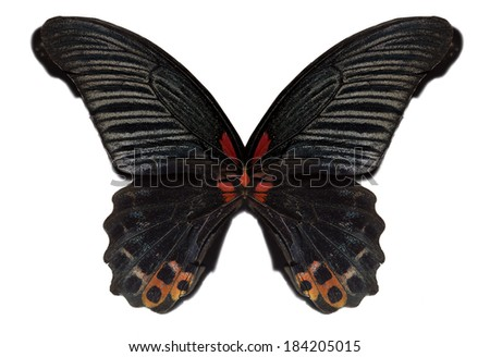 Black butterfly wings isolated - stock photo