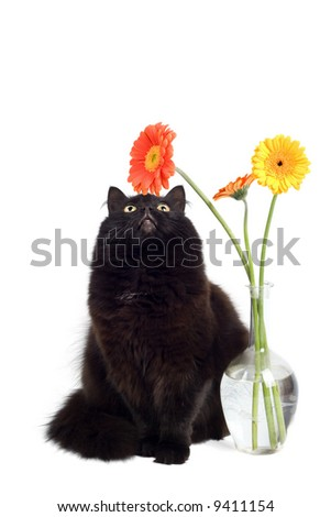 black cat and daisies