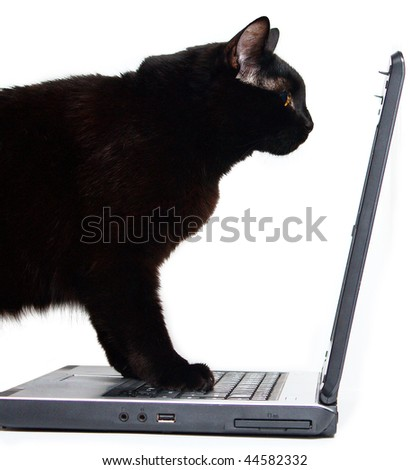 Black Cat and laptop isolated on white. - stock photo