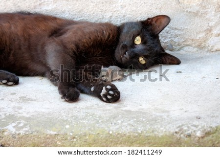 Black cat and mouse in a hunter - prey relation - stock photo
