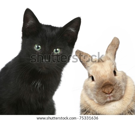 Black cat and rabbit. Close-up portrait on a white background - stock photo
