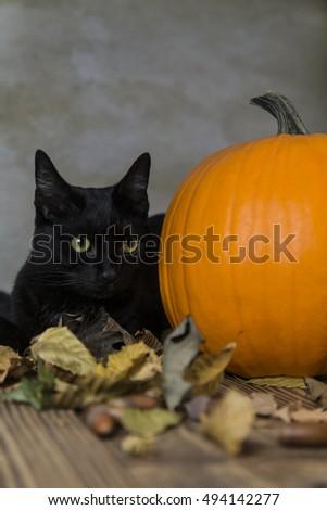 Black Cat Symbol Halloween Orange Pumpkin Stock Photo 494142277