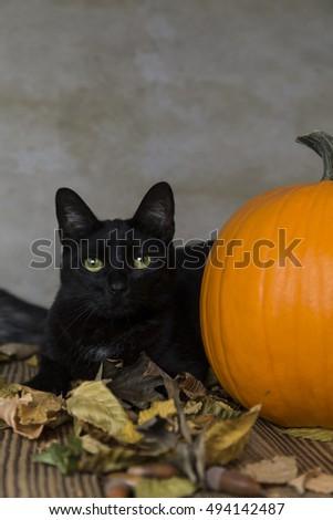 Black Cat Symbol Halloween Orange Pumpkin Stock Photo Download Now