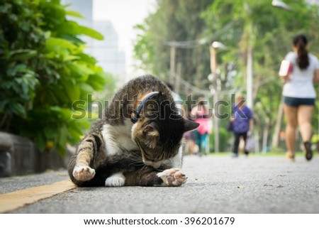 Black cat clean its fur in the park - stock photo