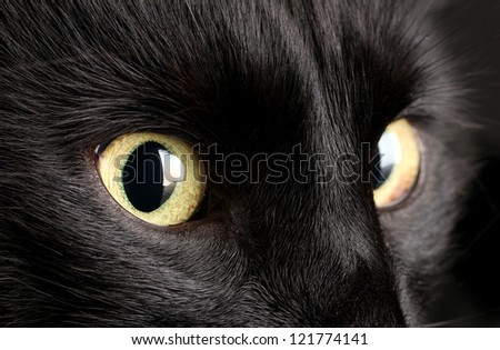 Black cat, close up - stock photo
