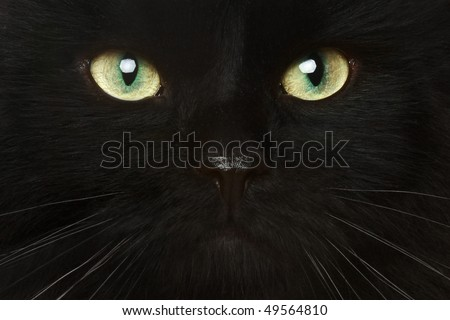 Black cat close-up portrait