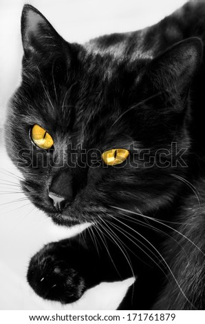 black cat closeup - stock photo