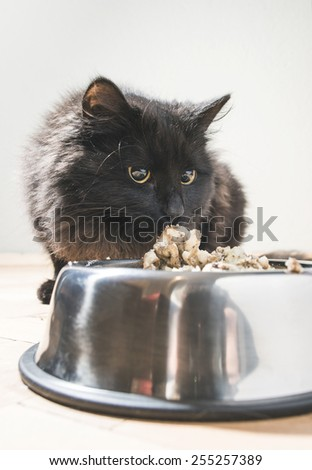 Black cat eating in the floor  - stock photo