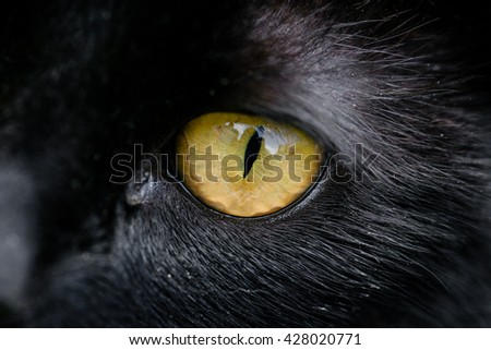 Black cat eye close up