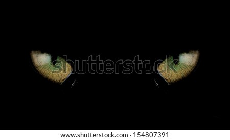 Black Cat Eyes - stock photo