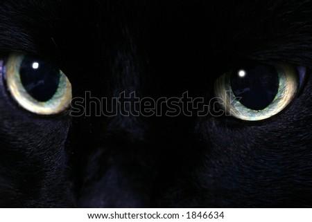 Black cat eyes - stock photo