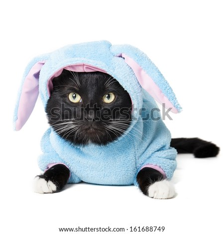 black cat in a bunny suit isolated on white background - stock photo