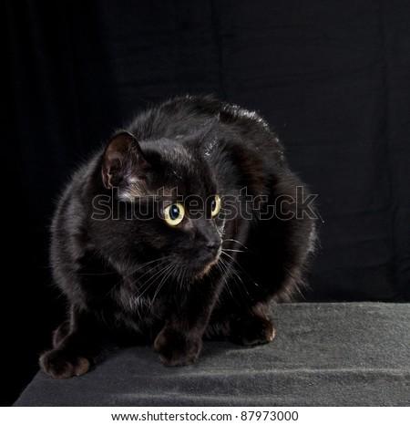 Black cat in a dark room - stock photo