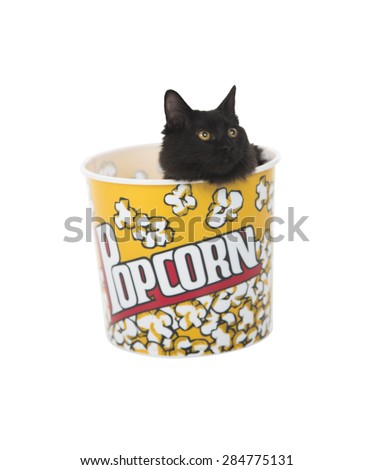 Black cat in a popcorn box against a white background - stock photo