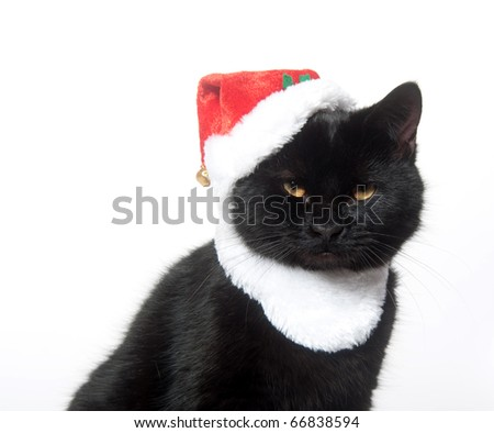 Black cat in a santa hat on white background - stock photo