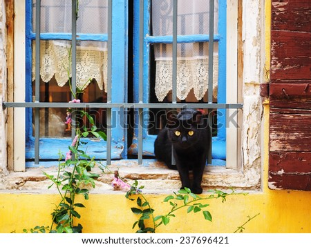 Black cat in a window in Arles, France - stock photo