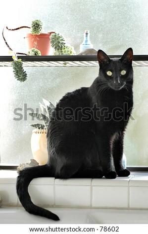 Black cat in bathroom window - stock photo