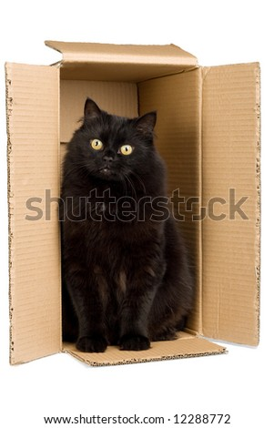 black cat in box isolated - stock photo