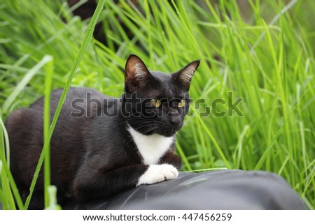 Black cat in the grass.