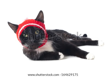 black cat in the hat on a white background in studio