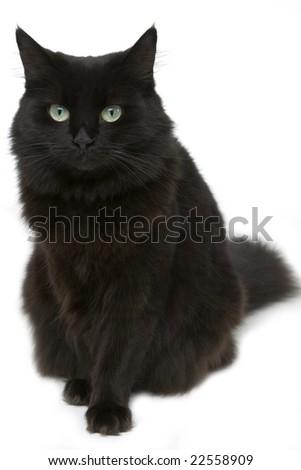 Black cat in the studio - stock photo