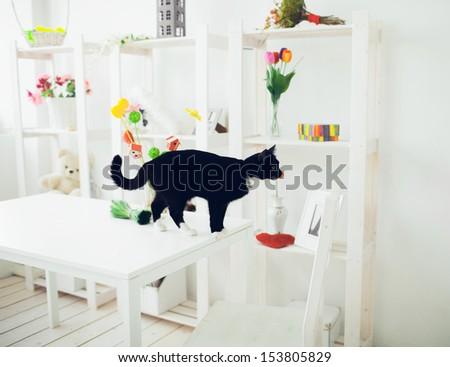 black cat in white interior - stock photo